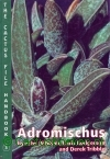 Pilbeam, J. , Rodgerson, C. , Tribble, D.- Adromischus
