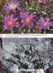 Edward F. Anderson, Salvador Arias Montes, Nigel P. Taylor, Andrea Cattabriga - Threatened Cacti of Mexico (plate 2).