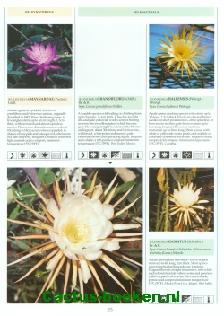 Innes, C. & Glass, C - The illustrated Encyclopedia of Cacti (1991) (blz 273).